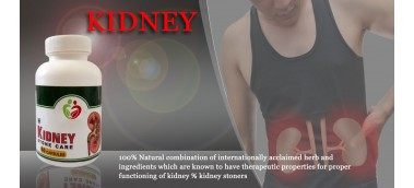 Kidney Disease Causes and Therapy